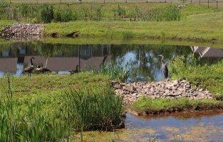 Riverknoll wildlife.JPG
